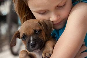 The Link between Animal Abuse and other Forms ofViolence